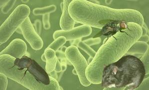 Hygiène & biosécurité